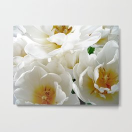 White tulips with afterglow centers Metal Print