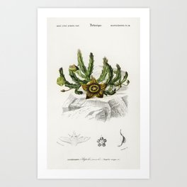 Carrion-flower (Stapelia variegata) illustrated by Charles Dessalines D Orbigny (1806-1876) Art Print