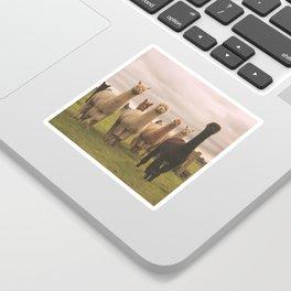 Alpacas at Tio Farm Sticker