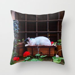 Sleeping Cat Outside Window | Europe Rome Italy Street City Photography Throw Pillow