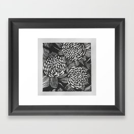 Waratahs Framed Art Print