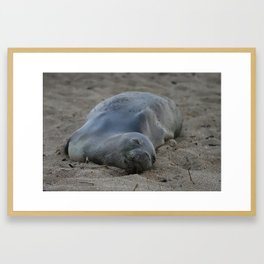 Monk Seal Resting on Beach Framed Art Print