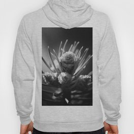 aspirations of the pinecone Hoody