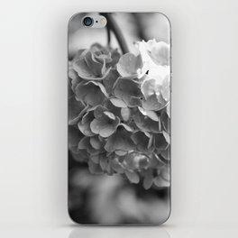 Hydrangea in Bloom iPhone Skin