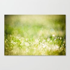 morning dew no.2 Canvas Print