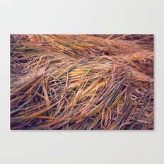 autumn grass Canvas Print