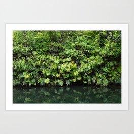 Calming tranquil greenery reflecting in still Jungle stream, Japan Art Print