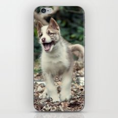 Happy puppy iPhone & iPod Skin