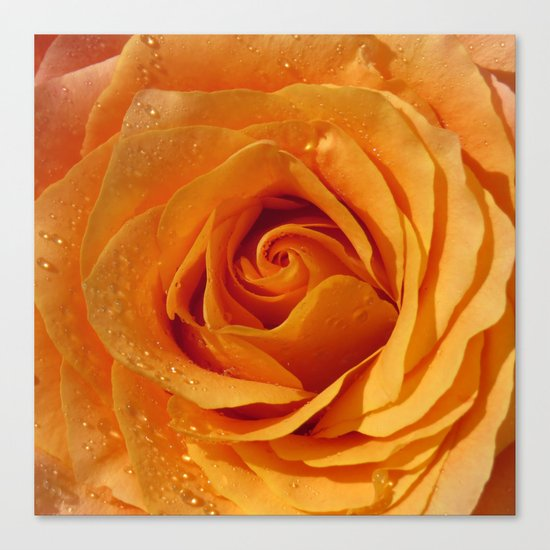 Gold Rose Bud- Orange Roses and flowers Canvas Print