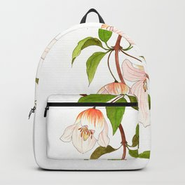 Clematis Cirrhosa Backpack
