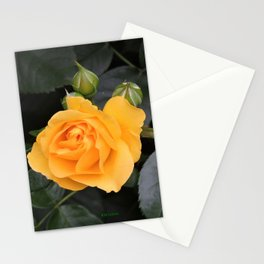 "A Rose Named ""Julia Child"" Stationery Cards"