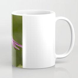 Macro Shot Of A Purple Osteospermum Coffee Mug