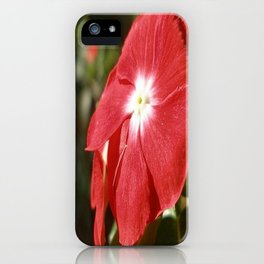 Close Up Of A Red Busy Lizzie Flower iPhone Case