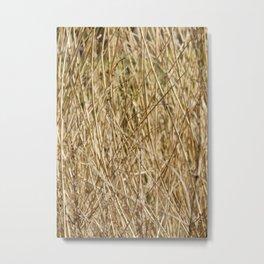 Golden Reed Tangle Metal Print
