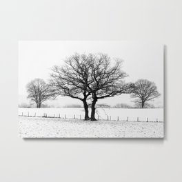 Three Winter Oaks Metal Print