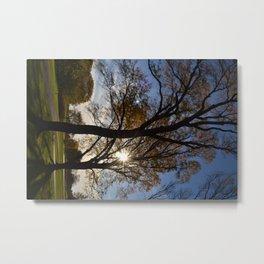Sun shining through the trees Metal Print