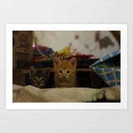 love cat photography Art Print