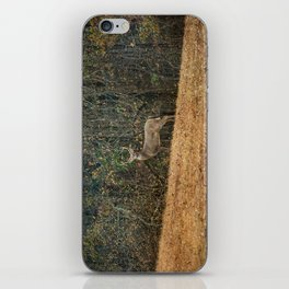 Buck At Pinson Mounds iPhone Skin