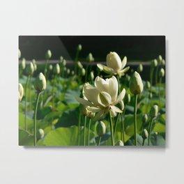 Wilcox Park White Lily Metal Print