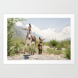 Burros in Mexico Art Print