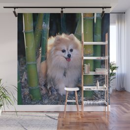 Buffy, the Celebrity Pomeranian, in Bamboo Forest Wall Mural