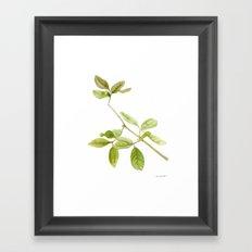 A branch of the tree Psidium fortium Framed Art Print