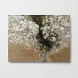 barnicle growth Metal Print