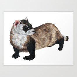 Black-Footed Ferret Art Print