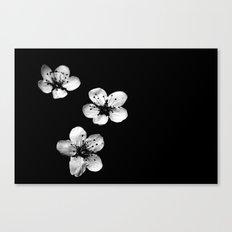 Trio of White Flowers Canvas Print