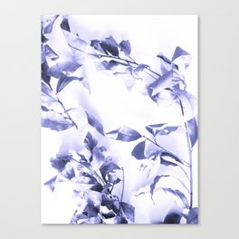 Bay leaves 3 Canvas Print