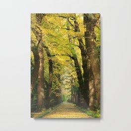 Ginkgo biloba trees Metal Print