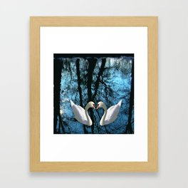 Swans and reflection Framed Art Print