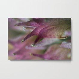 Stardust flower closeup Metal Print