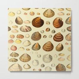 Vintage Shells Metal Print