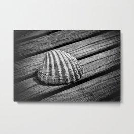 A single shell Metal Print