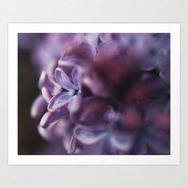 Lavender and Lilacs Art Print