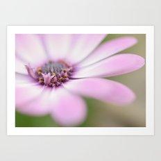 Soft Petals Art Print