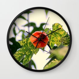 A Beaut Of An Abutilon Wall Clock