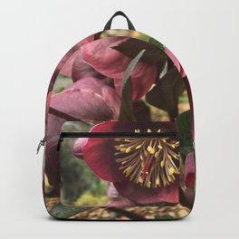 Helleborus Backpack