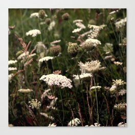 White Fields Canvas Print