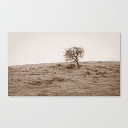 The Hills of Sonoma Canvas Print