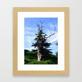 Twisted Tree Framed Art Print
