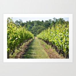 Vineyard Path Art Print