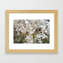Spring IV Framed Art Print