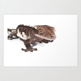 Crested gecko on white Art Print