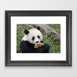 Panda Likes Framed Art Print