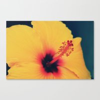 hibiscus Canvas Prints featuring Hibiscus by MSG Imaging