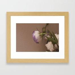 Chinese rose. tenderness ,  affection ,  gentleness ,  softness ,  caress Framed Art Print