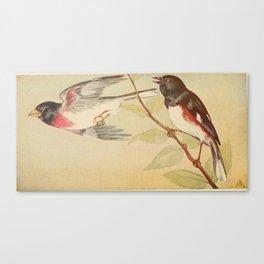 Vintage Print - Rose-Breasted Grosbeak & Towhee Canvas Print