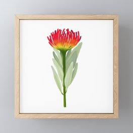 Flame Protea Flower Framed Mini Art Print